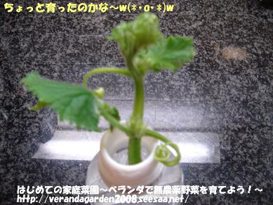 DSC01484.JPG
