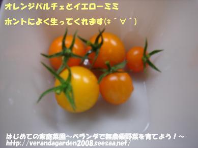 DSC01675.JPG
