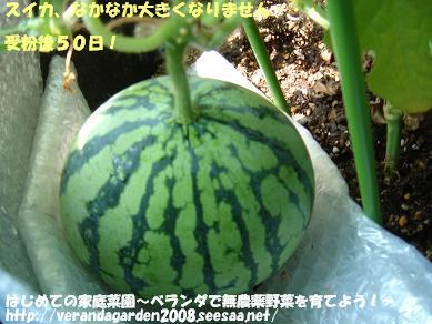 DSC01797.JPG