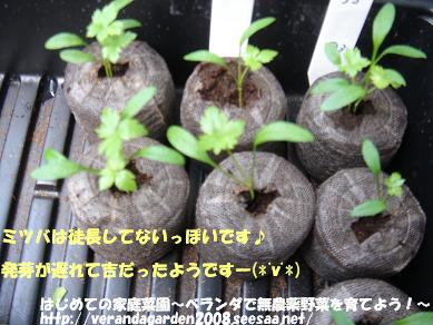 DSC02058.JPG