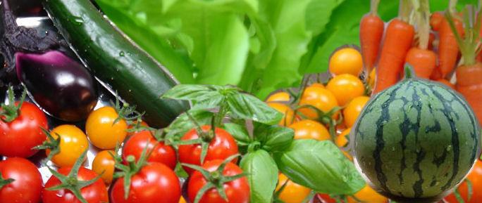 2008年夏栽培収穫した野菜たち.jpg