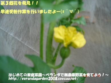 DSC01350.JPG