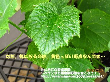 IMG_1224.jpg
